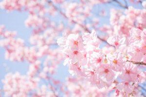 外濠公園 桜 ライトアップ