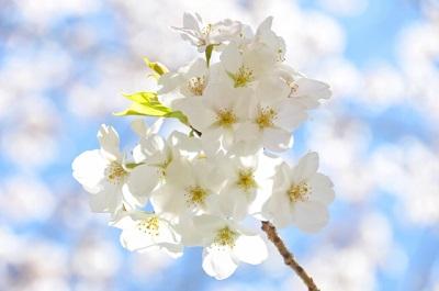 隅田公園 花見 場所取り 時間