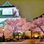 兼六園の桜2017の見頃と無料開放はいつ?おすすめランチはここ!