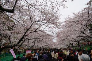 上野公園 お花見 時期 混雑状況