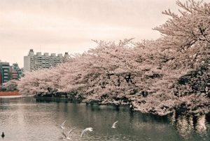 上野公園 お花見 宴会 時間制限