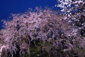 六義園 花見 ライトアップ 時間