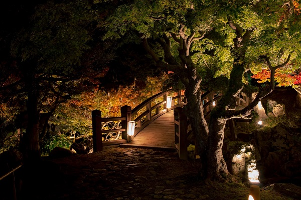東京都内の紅葉デートにおすすめの公園のライトアップ
